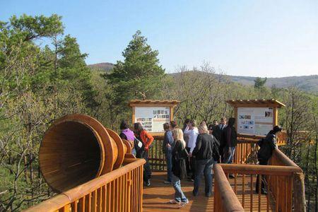 Leute in der Natur am Baumwipfelweg (Holzbrücke)
